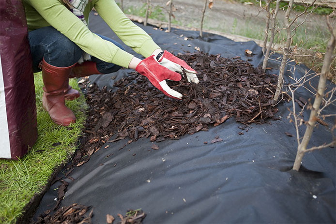 Laying Mulch Over Fabric